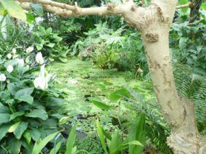 botanischer-garten-chemnitz-tropenhaus-4