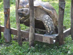 Tierpark Senftenberg 0019
