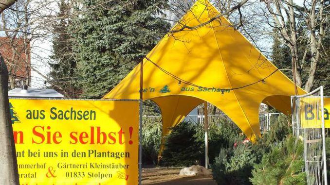 Weihnachtsbaum in Sachsen selber schlagen