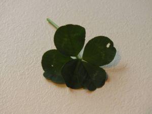 Ein fünfblättriges Kleeblatt soll Ruhm bedeuten!